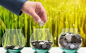 Base Erosion and Profit Shifting Framework (BEPS)